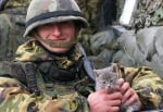 Сиво коте с войник