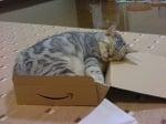 Сиво коте в кутия