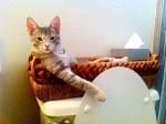Сиво коте в плетено легло