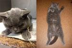 Сиво коте в приюта