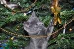 Сиво котенце си играе с украсата