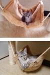 Сиво коте в хамак
