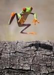 Скок на зелена жабка