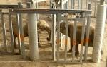 Слон реагира изумително, когато за пръв път от 37 години насам среща приятел (видео)