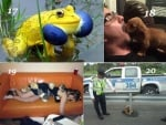 Смешни факти за животните