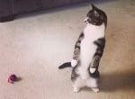 Смешни котки, които наистина обичат да стоят прави