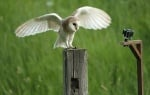 Снимка на дива сова