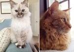 Снимки на възрастни котки, осиновени от хора с големи сърца