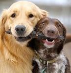 Социални контакти на кучето