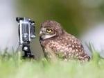 Сова с фотоапарат