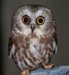 Животни с различен цвят на очите или когато природата иска да си поиграе