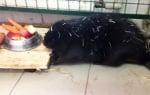 Спасен бобър в приют за животни
