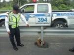 Спасен ленивец