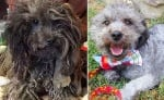 Спасено куче преживява невероятна трансформация, която ще стопли сърцето ви