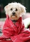 Спасено от удавяне кученце