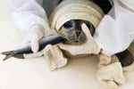 Спасено тюленче