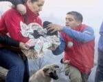 Спасителна акция за кученца