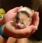 Спящо новородено котенце