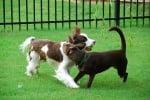Среща на кучето с други кучета