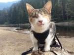 Стопанин разхожда незрящата си котка навсякъде със себе си
