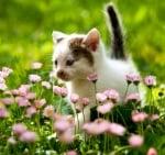 Страдат ли домашните любимци от алергия