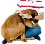 Страх при кучето