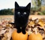 Суеверия за котките