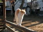 Сутрешно протягане на котка