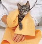 Сушене на котка