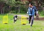 Състезание с дресиране на кучета в Стара Загора