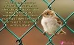 20 Март - Световен ден на врабчето