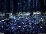Светулки в гората