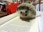 Таралеж върху книга