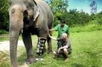 Слон с протеза