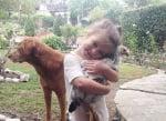 Момиченце с пиле и куче