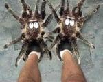 Топли пантофи като тарантули