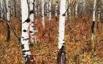 Това, което учените откриват в гората на Чернобил, шокира света!