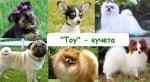 Toy- кучета