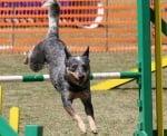 Тренировка на кучето