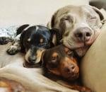 Три чифта меки ушички - пълно спокойствие!