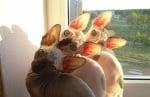 Три египетски котки