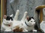 Три котки, спящи заедно
