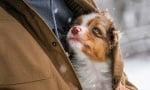 Трогващи и запомнящи се фотографии на моменти, наситени с любов към животните