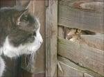Търсещи се котки