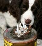 Тютюна е опасен за животните