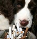 Тютюневият дим е опасен за кучето