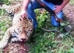 Убийството на ягуара Алонсо е признато за престъпление, започва досъдебно производство
