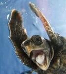 Учудена костенурка