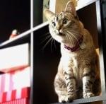 Учудена котка