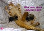 Една уморена мама